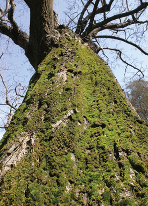botanico_albero