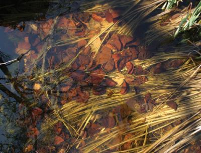 botanico_foglie