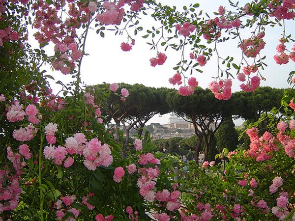roseto-comunale-Roma_Roses