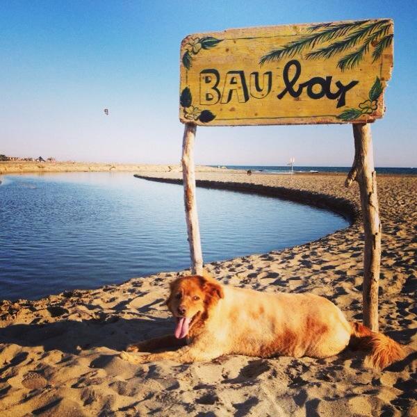 Maccarese_Bau-bay_BAUBEACH_spiaggia_cani_Roma