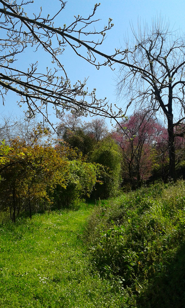 Orto_botanico_Gianicolo