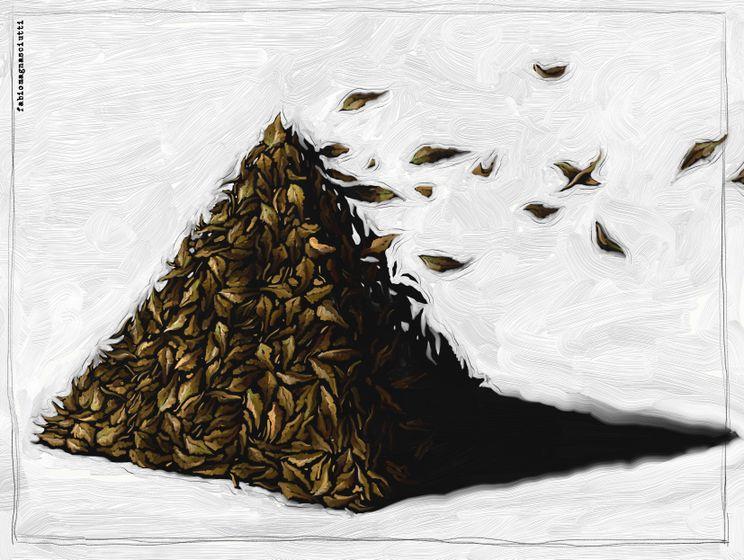 Fabio Magnasciutti_dead-leaves