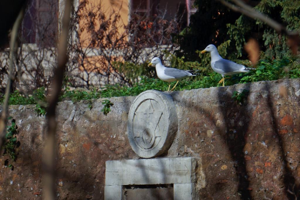 Passeggiate a-piedi-Roma_Walking-tour-Rome_La-Porta-Magica,Piazza Vittorio_Mercato-Esquilino_Photo-by-Antonio-Barbieri-311