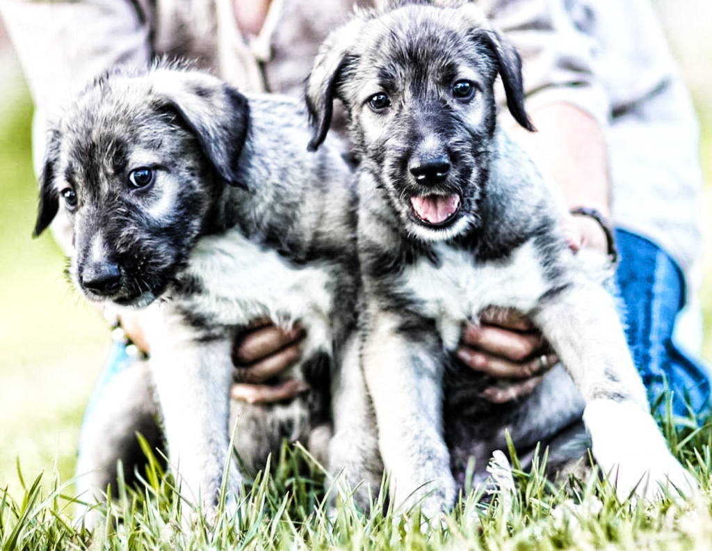 Can Dogs Have Twins Identical Puppies Rome Central Magazine