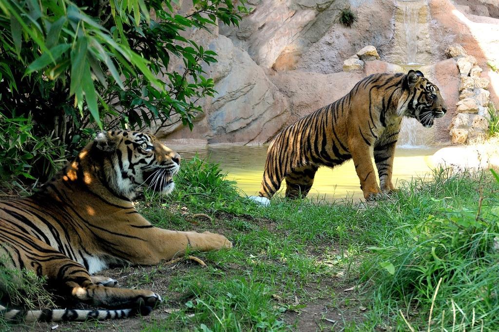 Tiger sito di incontri